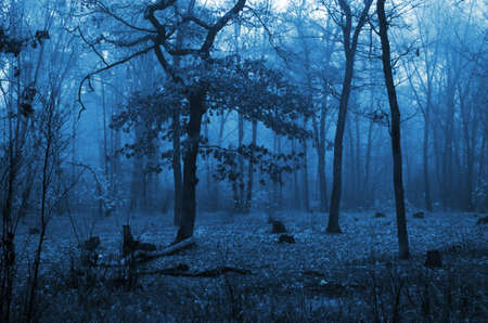Trees in a forest with fog and autumn leaves on the ground photo
