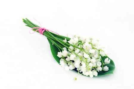 Close up of Lily of the valley  photo