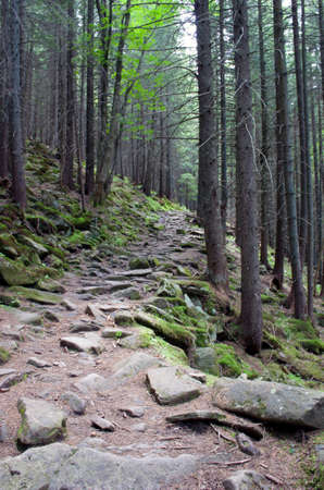 Pathway in summer green mountain forest photo