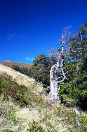 splintered: old tree, fallen tree, Old broken and splintered tree Stock Photo