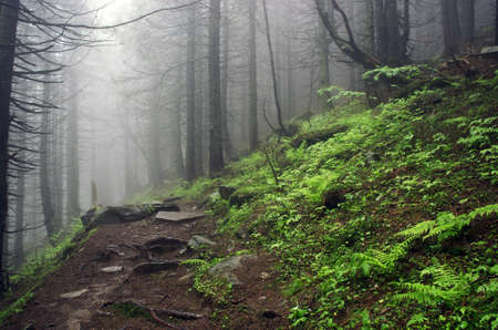 Beautiful summer forest mountain path
