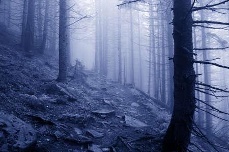 Prachtige zomer bos bergpad