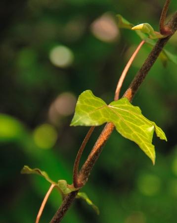 leaf 版權商用圖片