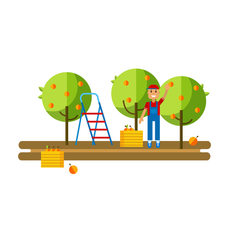 crates: Flat vector illustration harvesting fruits in the apple orchard. Work collects apples in crates at the apple orchard. Apple orchard flat icon.