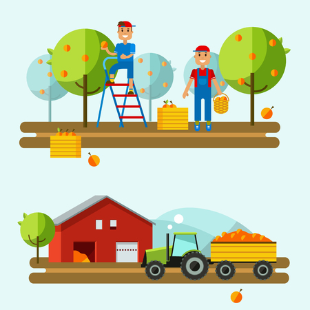 tractor in field: Harvest on farm. Tractor rides to picking.Fruits are in boxes. Set flat vector illustration crop field. Farm vector background. Agricultural machines.Crop in field. Crop science with tractor field. Illustration