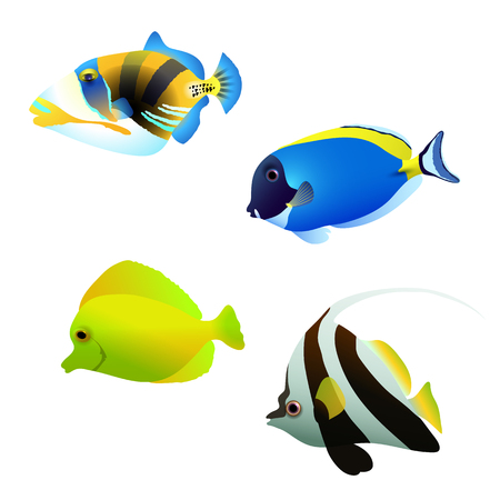 Vector illustration of a shoal of tropical fish. Set of different color of tropical fish. Coral cartoon fish.