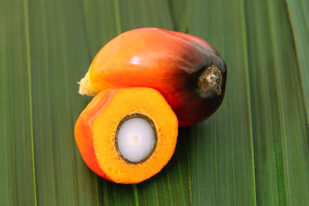 Close Up shot of cut oil palm fruit presenting its kernel and shell photo