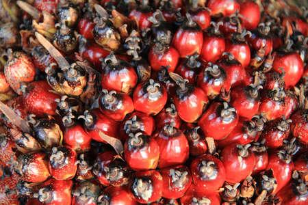 red palm oil: Bella rosso colore ad olio di palma tessitura frutti in azienda