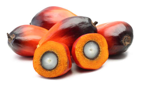 A group of oil palm fruits on the white background photo