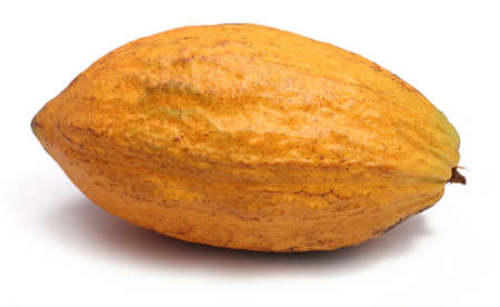 bitter fruit: A fresh cacao pods isolated on a white background