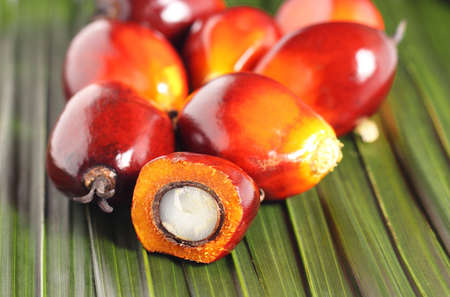 red palm oil: Cut fresh oil palm fruits on the leaves background
