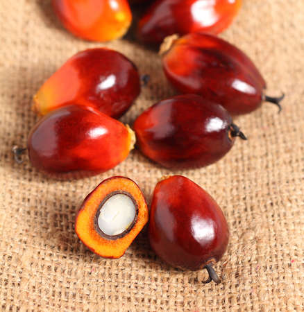 red palm oil: A group of oil palm fruits on sack burlap background  Stock Photo