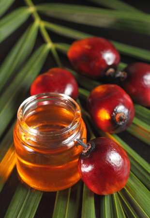 palm oil plantation: Oil palm fruits and oil bottle on a leaves background