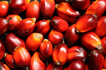 a bunch of oil palm fruits on a black background