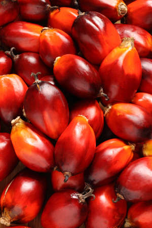 a bunch of oil palm fruits on a timber background photo