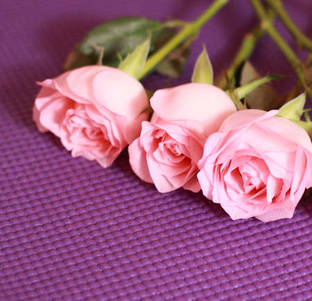 synonymous: Fresh pink roses close up  Rose is synonymous with love  Stock Photo