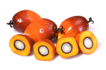 palm fruits: A group of oil palm fruits on the white background Stock Photo