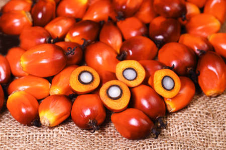 palm fruits: A group of oil palm fruits on the sack bag