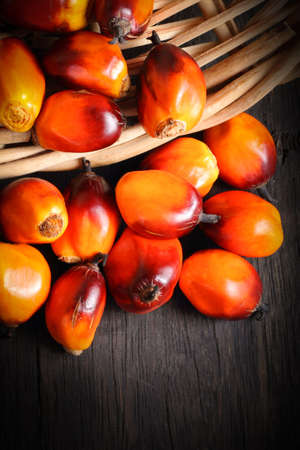 palm fruits: A group of fresh and ripe oil palm fruits in basket