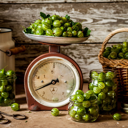 Green Gooseberries Being Prepared for Canning, square