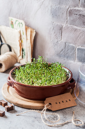 Growing Micro Greens, Sprouting Cress Salad Seeds, copy space for your text