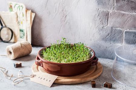 Wachsende Micro Greens, keimende Kresse-Salatsamen, kopieren Sie Platz für Ihren Text