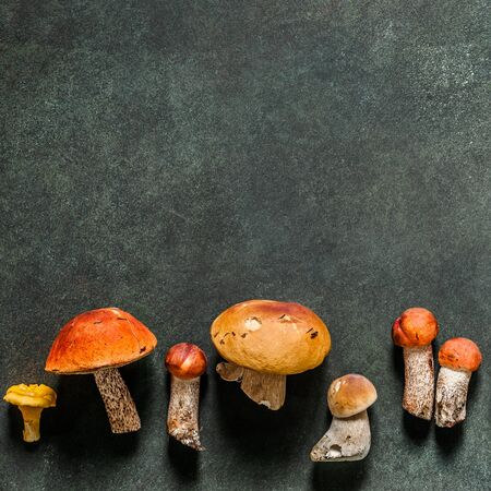 Variety of Wild Mushooms Set as Pattern, Chanterelles, Red Capped Boletes, Porcini, square Zdjęcie Seryjne
