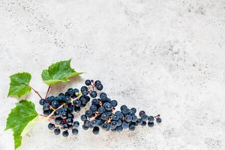 A Bunch of Black Grapes with Leaves, copy space for your text