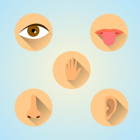 Five Senses Icon.Flat style design Illustration