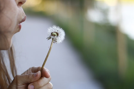 A dandelion flower closeup being blown  on a summer sunny day with bokeh background.