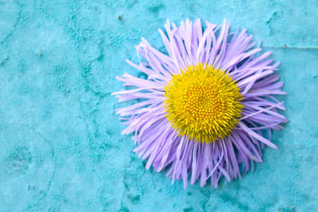 flower on a blue background photo
