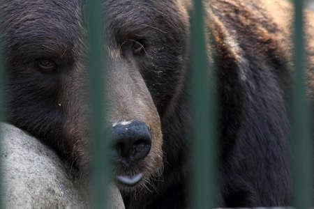 bear in a zoo behind bars