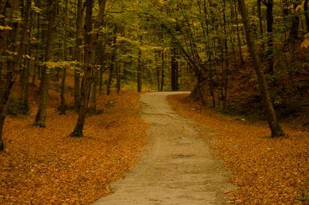 sonbahar Stok Fotoğraf
