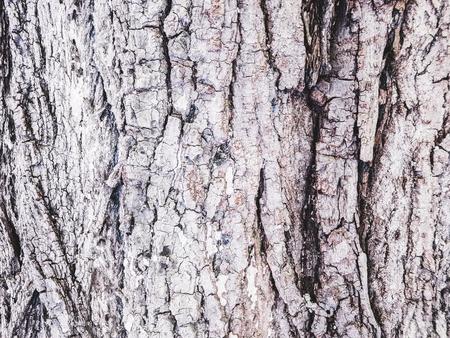 bark, close-up, background, texture 版權商用圖片