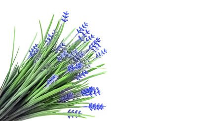 Huge bunch of blue spring flowers in the lower left corner on the image on a white background. Postcard. St. Valentine's Day, International Women's Day, birthday, holiday concept, copy space
