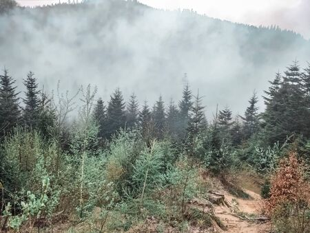 Misty day in the Mountains of Ukraine, the Carpathians, the smoke over the trees