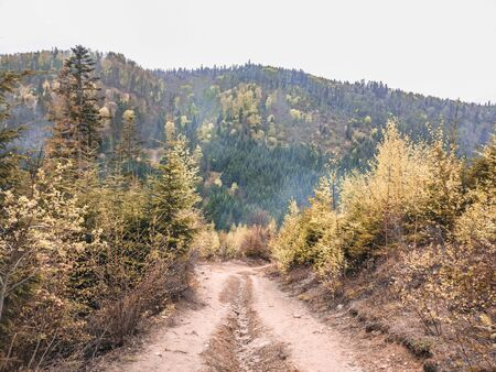The scenic trail in the highlands amid forests and mountains, wildlife