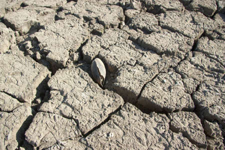 Dry earth, mud, cracked earth, the bottom of the reservoir photo