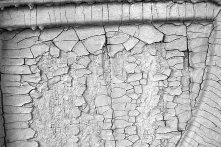 Coarse background of old, white paint with cracks and tree decorations photo