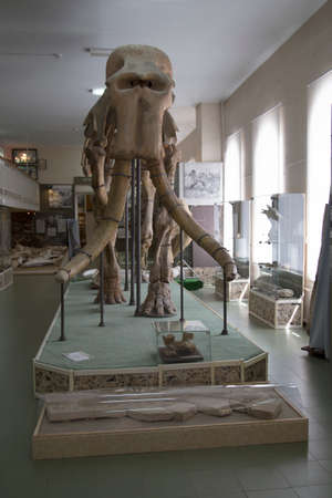 has been: one of five found in the world of southern elephant skeletons, ancient history