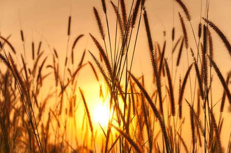 Grassland and sun photo