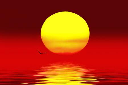 coucher de soleil: Oiseaux, survolez le coucher du soleil