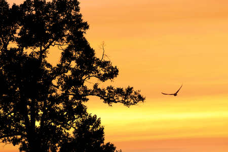 Birds flying in the sky gold at sunset photo