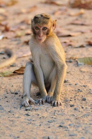 Little monkey sitting on the ground.