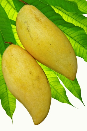 edible leaves: mango ripe yellow and leaf green on a white background.