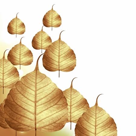 Dry leaf isolated on white background . Stock Photo