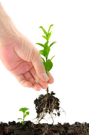 Green seedling in hand isolated on white Stock Photo - 10846991