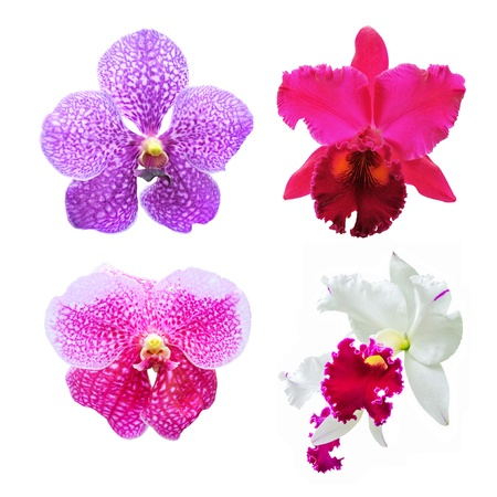 set of flower orchid ( Cattleya, Vanda ) on white background. Foto de archivo
