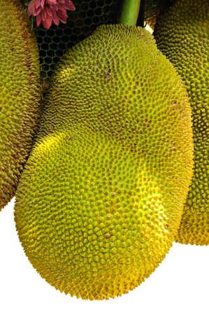 jackfruit  tropical fruit in thailand