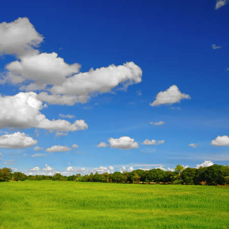 Landscape of rice field with a blue sky and cloud   photo